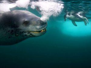 Подводный монстр