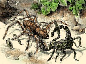 Фаланга и скорпион