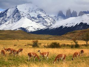 В Патагонии