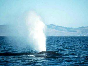 Фонтан синего кита