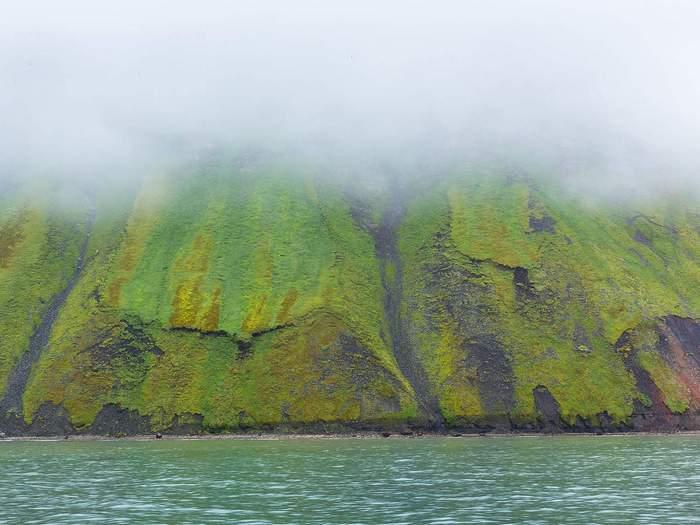 Зеленый берег