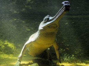 Ровесник динозавров