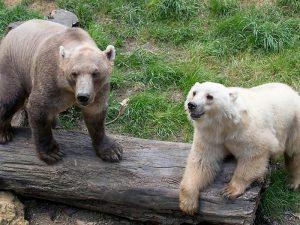 Гролар и белый медведь