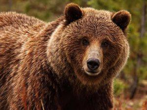 Медведи фото