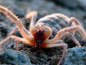Хищный паук