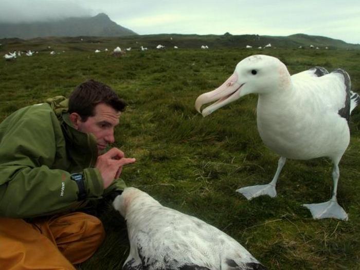 Изучение альбатросов