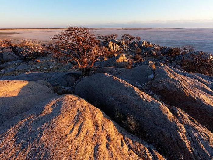Каменный баобаб