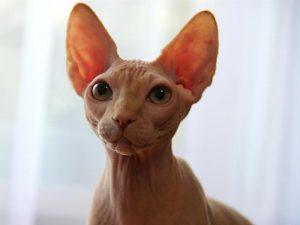 Кот-инопланетянин