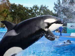 Самый крупный дельфин