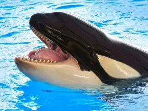 Зубы большого дельфина