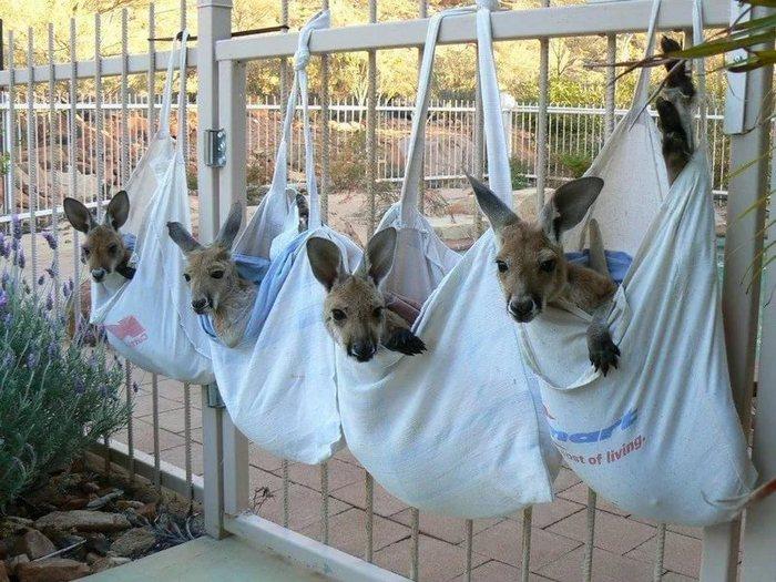 Сумка для кенгуру