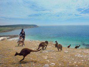 Кенгуру и туристы