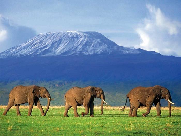 Интересные факты про Килиманджаро. 10 фактов о вулкане Килиманджаро