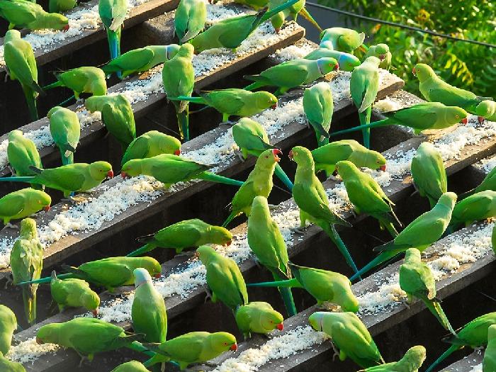 Корм для 4х тысяч попугаев