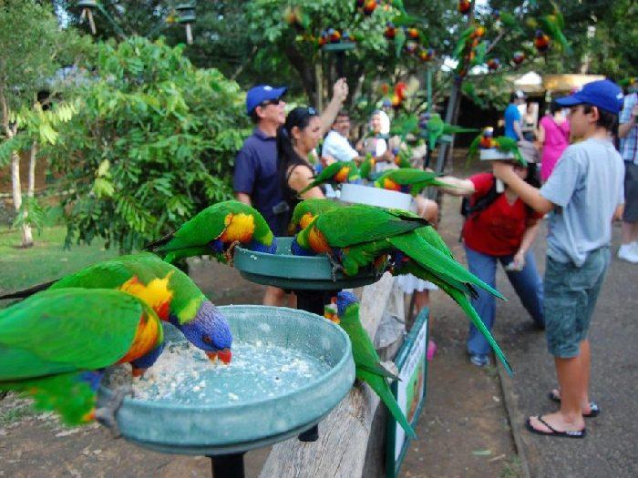 Породы попугаев