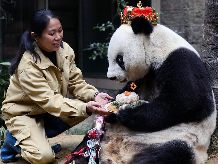 Королевская панда