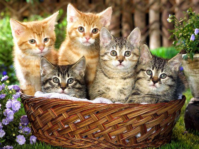 Котята в лукошке