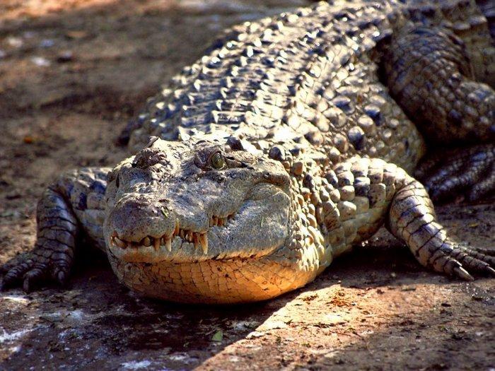 Тюрьма с крокодилами