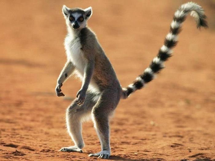 Привет с Мадагаскара