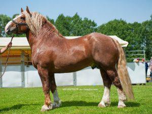 Лошади тяжеловозы фото