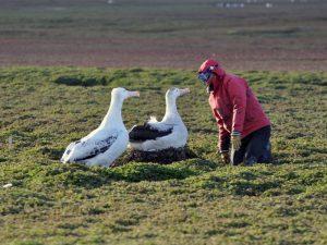 Люди и альбатросы
