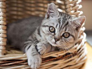 Маленький а уже кот