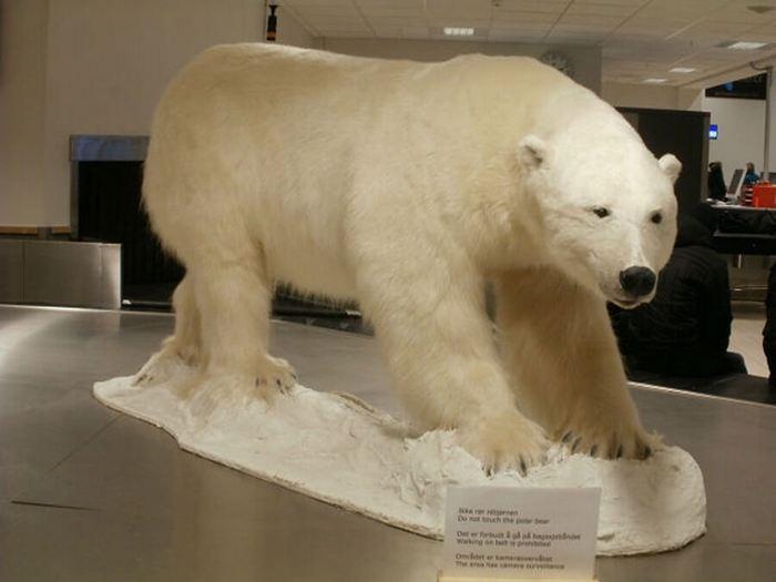 Медведь в музее