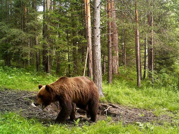 Медвежьи угодья