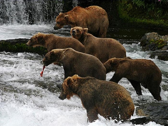 Медвежий рыбхоз
