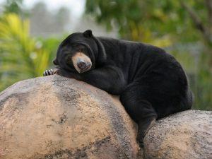 Медвежья кровать