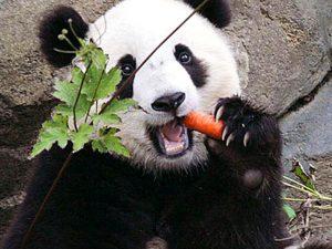 Морковка на закуску