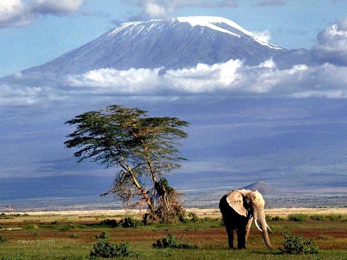 На фоне Килиманджаро
