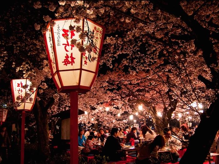 Сакура в Киото