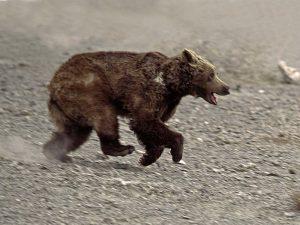 Медведь трусишка