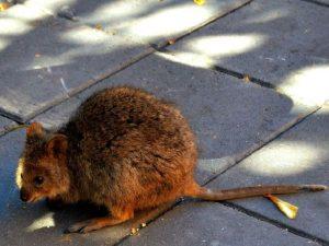 Не крыса