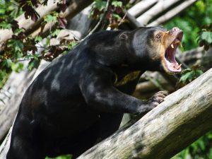 Медвежье недовольство