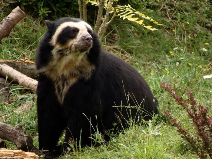 У медведя нос по ветру