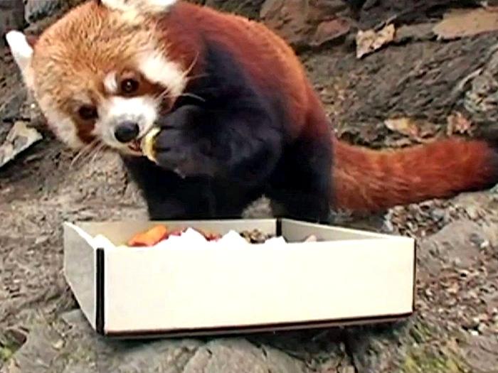 Печенье для панды