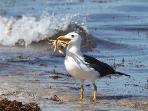 Обед альбатроса