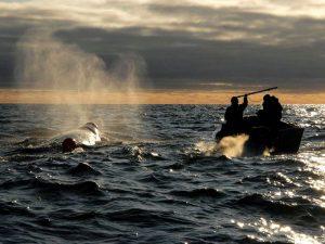 Охота на кита