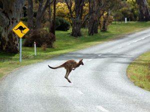 Осторожно кенгуру