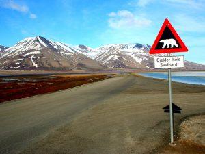 Осторожно медведи
