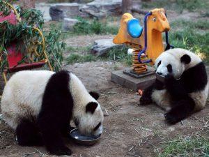 Каша для панды