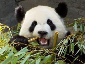 Разный бамбук