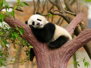 Сон на дереве