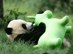 Игрушки для панд