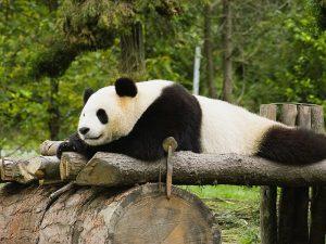Лежанка для панды