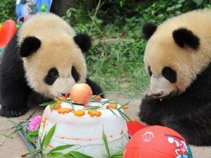 Подарок для панды