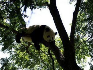 Приколы панды
