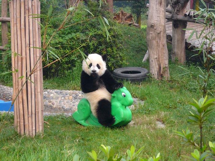 Качалка для панды